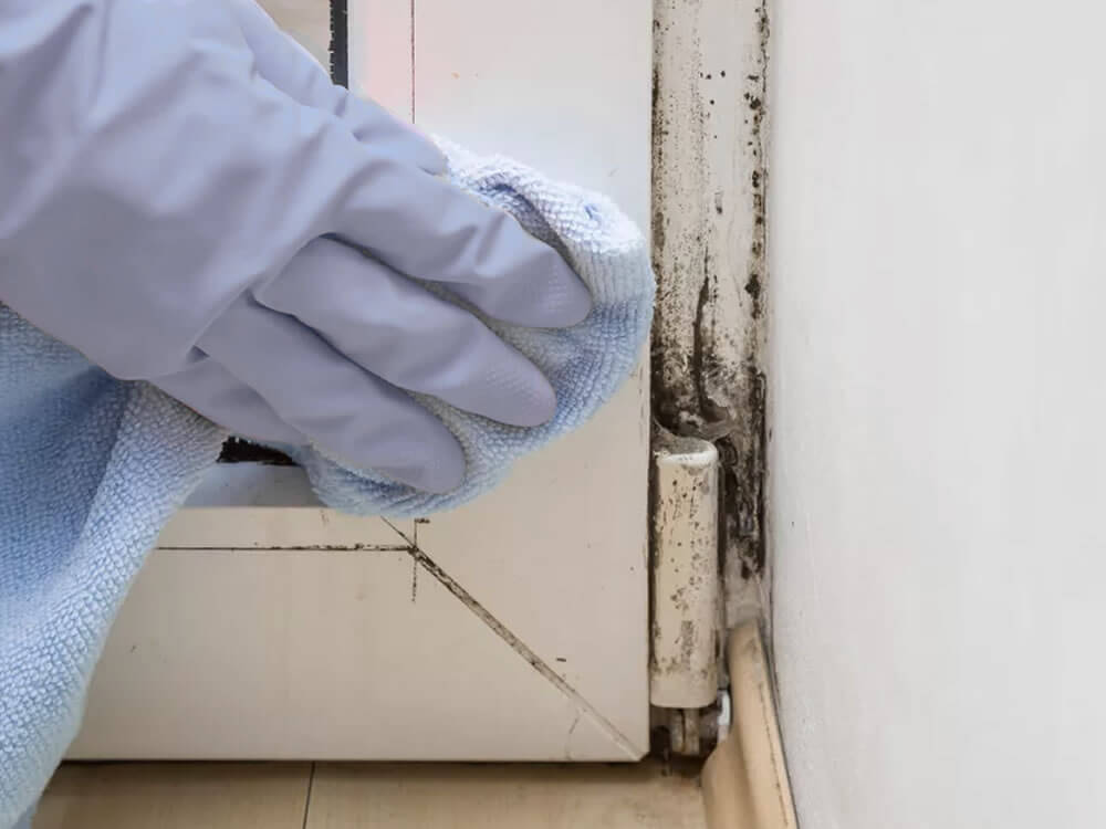 Mold Mildew Difference